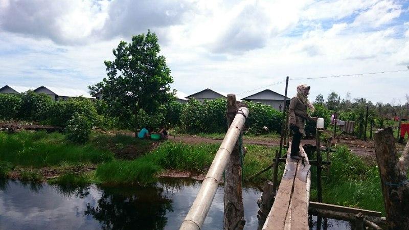 Satu sungai yang dihubungkan dengan jembatan darurat mengisolir warga eks Gafatar Samboja.(foto: andi)